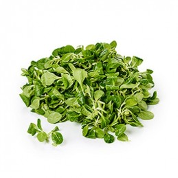 Salade mâche CARREFOUR