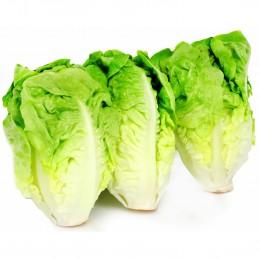 Salade Laitue Sucrine