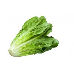 Salade Laitue Romaine 2 pièces